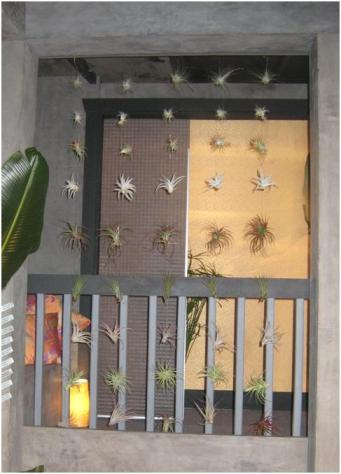 air-plant-screen